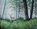 View Forest Mist