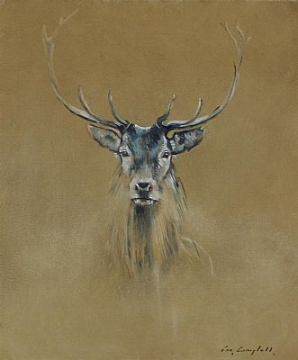 Click to enlarge The County Down Stag by Con Campbell