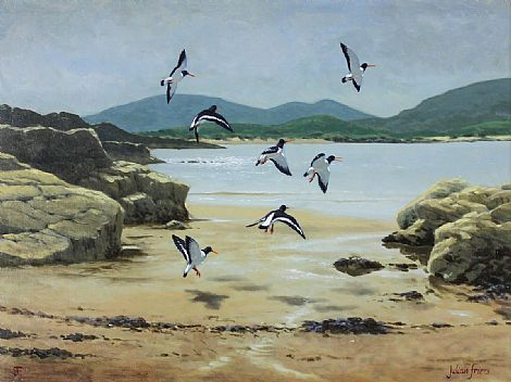 Click to enlarge Oyster Catchers In Flight by Julian Friers PRUA