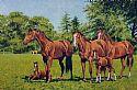 View Horses