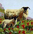 View Spring Sheep